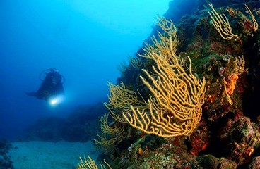 Sv. Marina Diving Centre